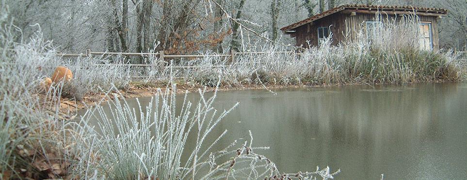 petit matin d'hiver au bassin