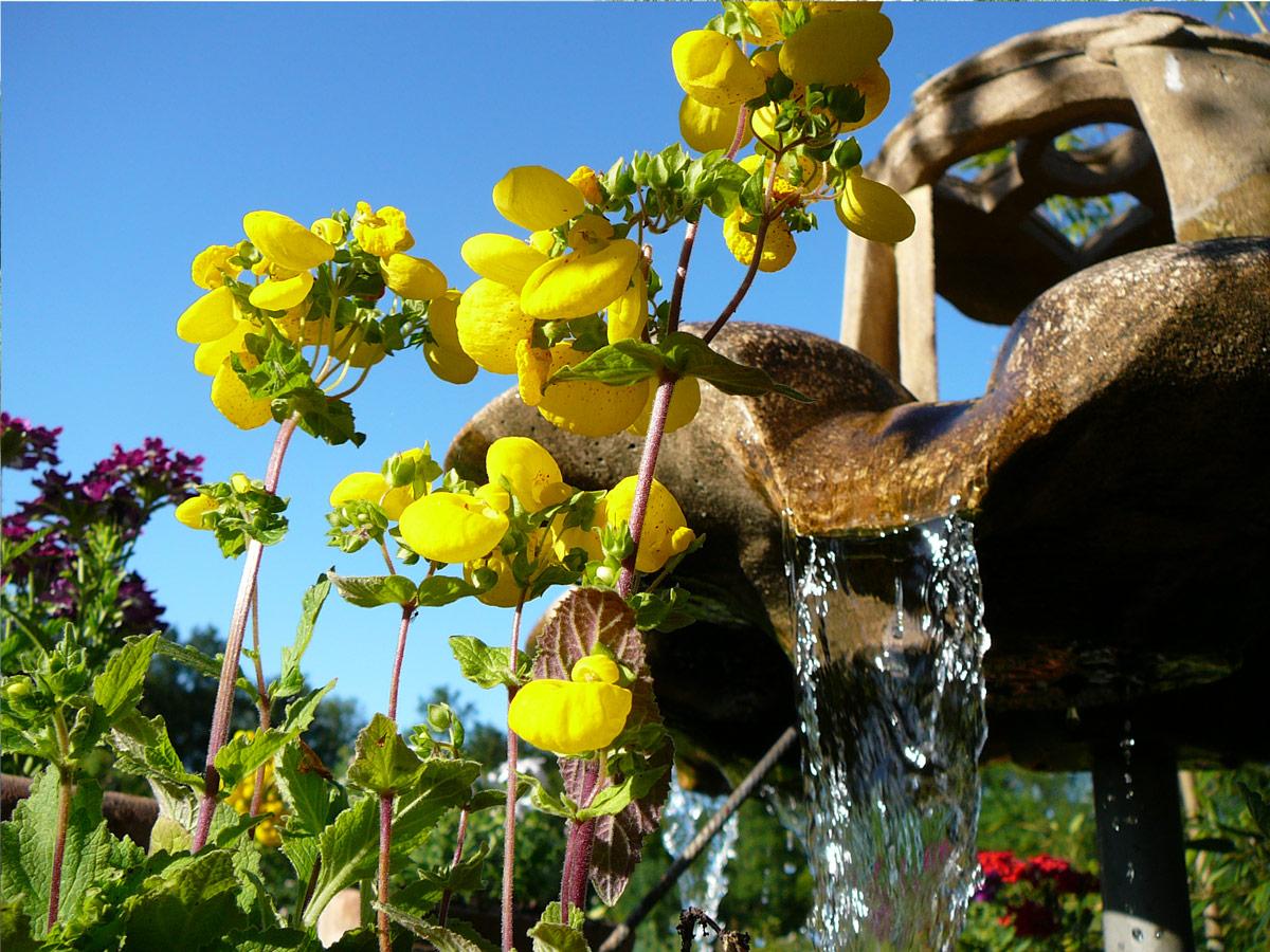 vasque du puits au centre du jardin
