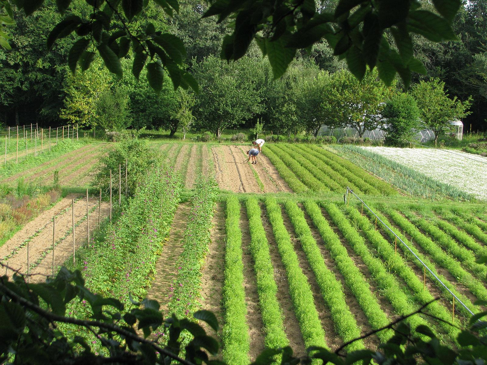 binages-au-jardin-en-début-d'été