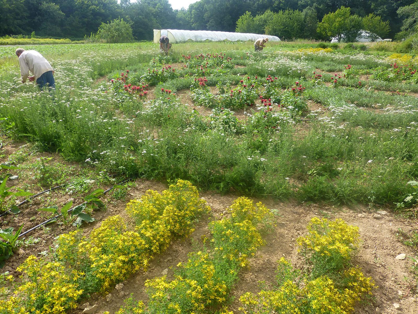Cueillette dans le jardin de formes alta r plantes for Le jardin katalog 2015