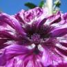 Mauve 319  Elixirs floraux