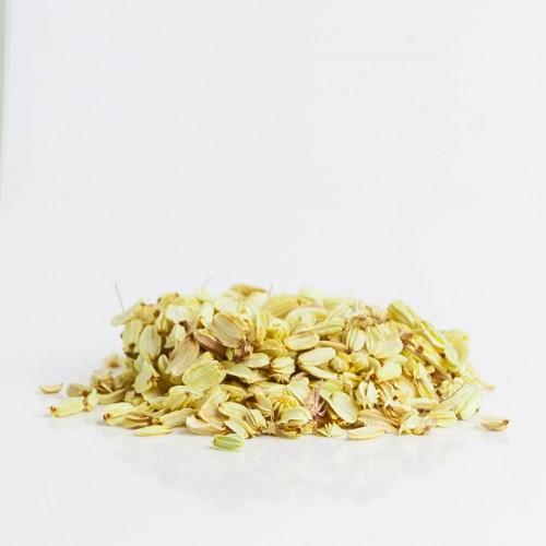 Angélique 185  plantes condimentaires
