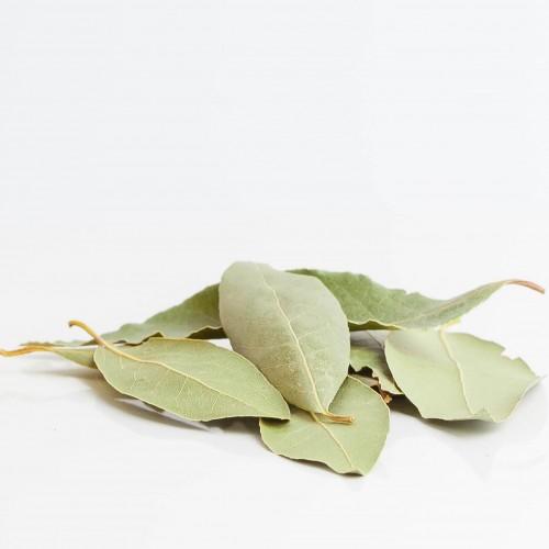 Laurier 223  plantes condimentaires