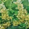 Kalk 264  plantes à tisane