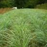 Citronnelle (Lemongrass) 277  Tisanes & infusions