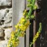 Aigremoine 301  Elixirs floraux