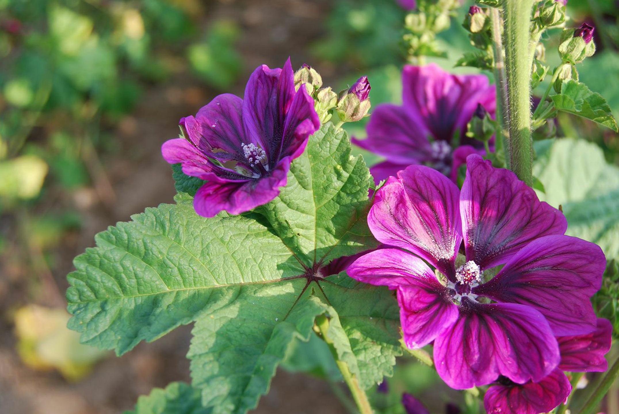 Altaïr, producteurs de plantes en agriculture biologique et biodynamique