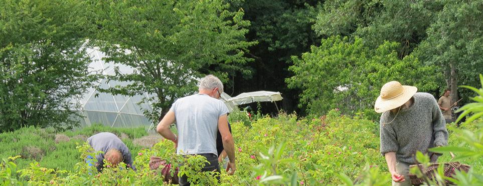 Lieu de cueillette du pin , Hautes chaumes