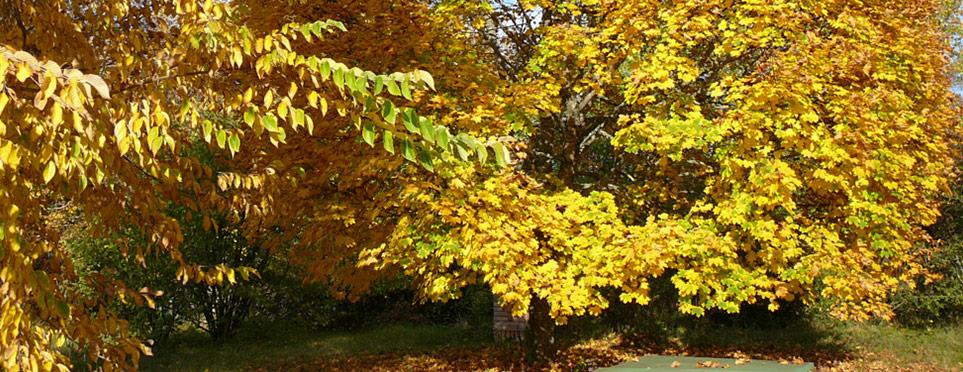 l'automne est là et ses riches couleurs !