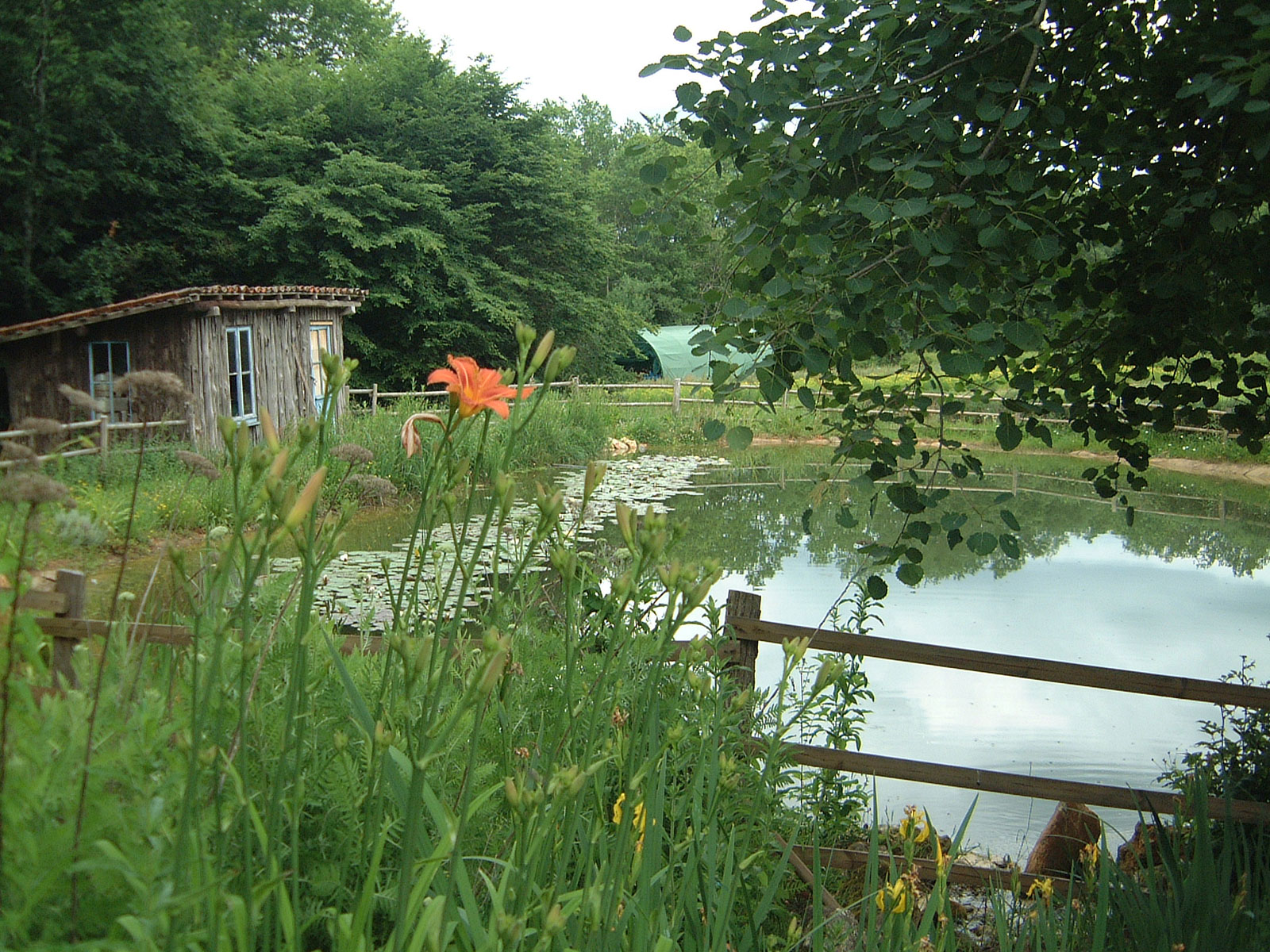bassin-et-cabane-au-jardin