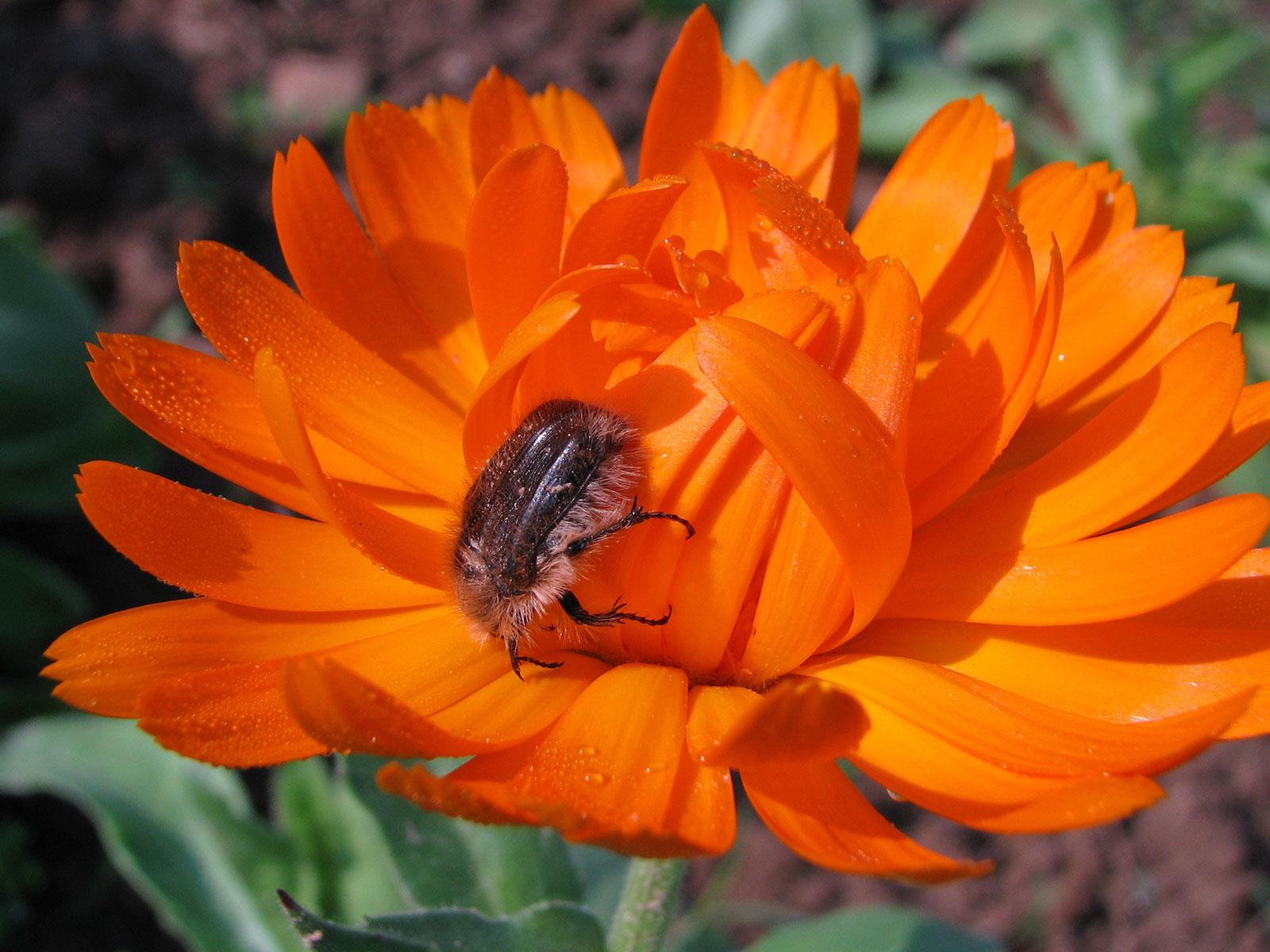 les-insectes-aussi-apprécient-nos-plantes!